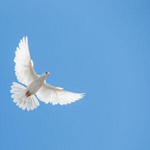 Heilige Geest lessen